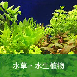 水草・水生植物