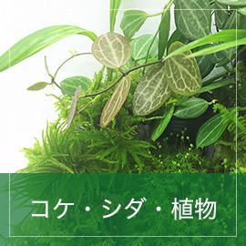 コケ・シダ・植物